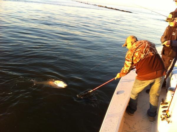Pipkin ranch outfitters inshore fishing photo 250 for Gulf shores inshore fishing